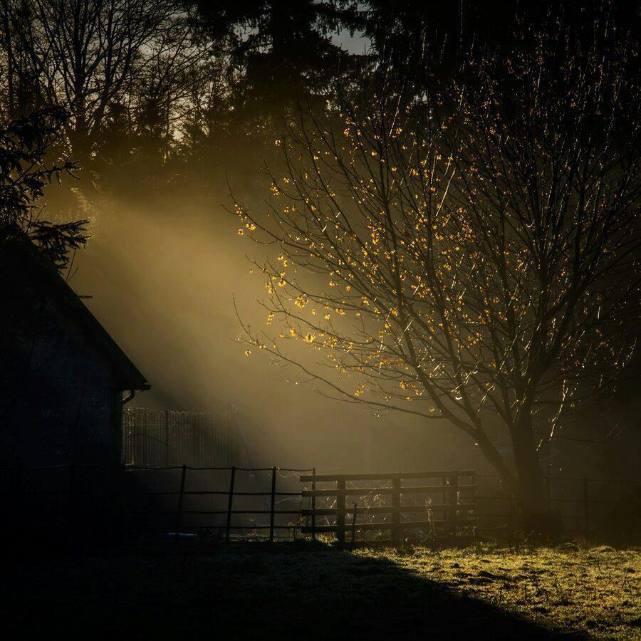 Фотосъемка с естественным светом и золотые минуты идеальные для съемки 1